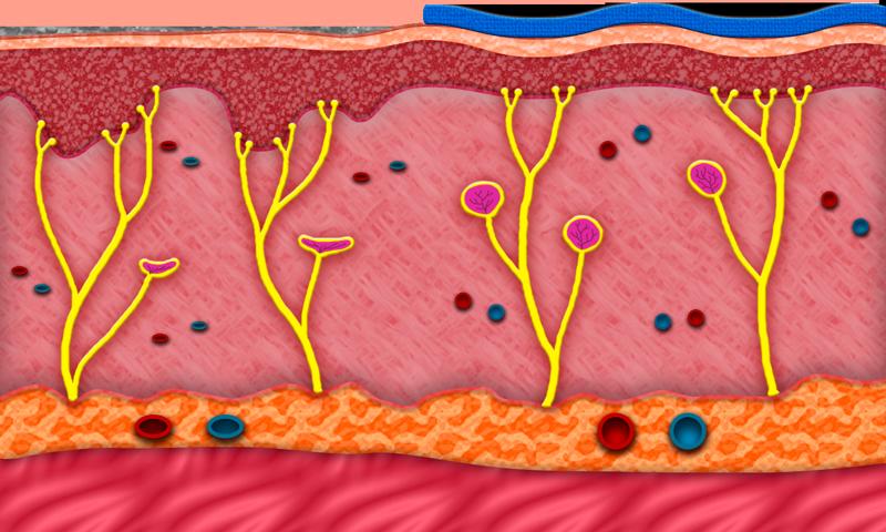 BronVit Tape anatomie kůže
